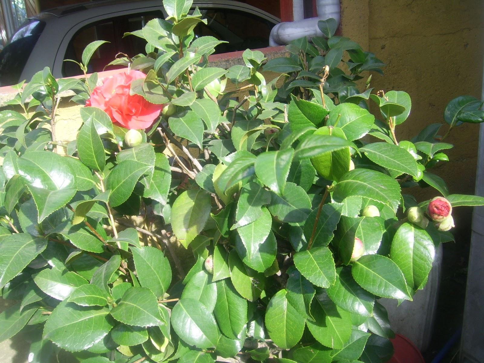 Esta soy yo flores plantas y mi jard n for Plantas para mi jardin