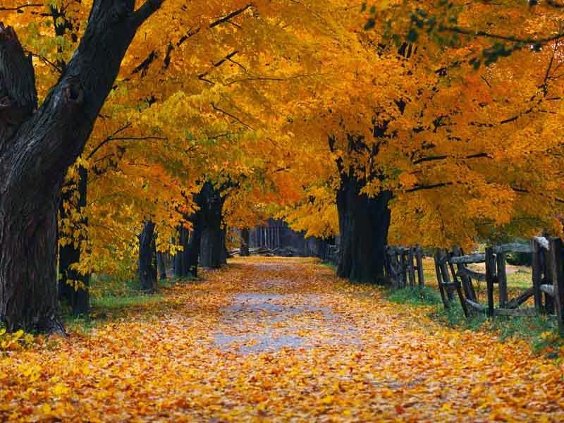 http://2.bp.blogspot.com/-0J_InumwUeM/U0RXYMf8y_I/AAAAAAAAAHg/-Oybs02jJDo/s1600/Autumn.jpg