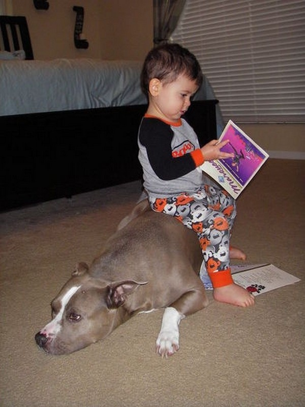 Are pitbulls good pets