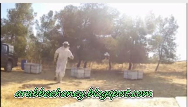 Video-The Dancing Beekeeper