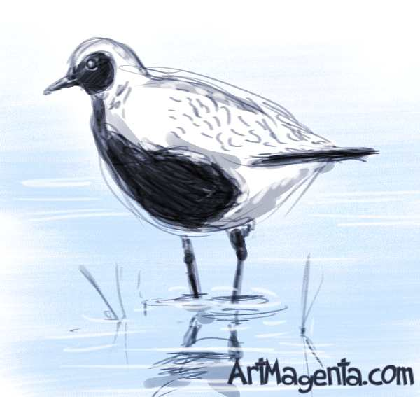 Grey Plover is a bird drawing by ArtMagenta