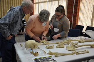 Participants assemble the spine of a skeleton.