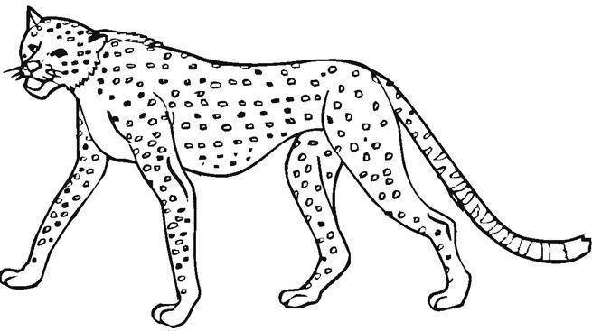 Leopardo colorear - Imagui