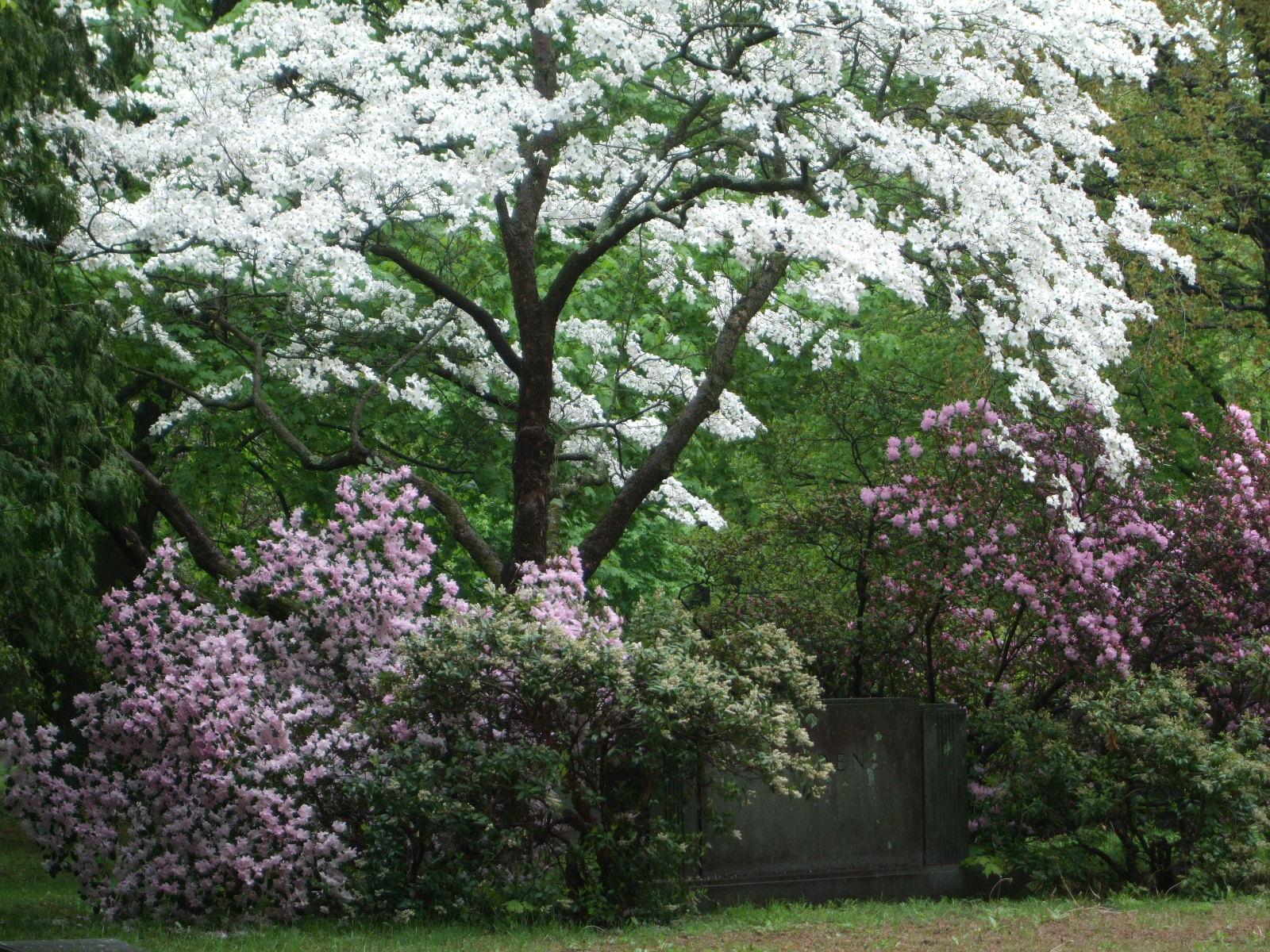 Seeing New England: FLOWERING TREES