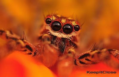 Macro photography spider