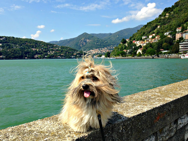 Rocco Havanese at Lake Como, Italy enjoying the good life
