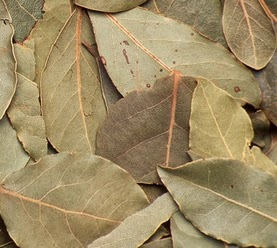 Manfaat daun salam yang luar biasa