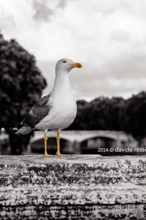 Il Gabbiano fotografia davide rossi