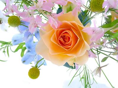 Rosa color naranja, Fondo de pantalla