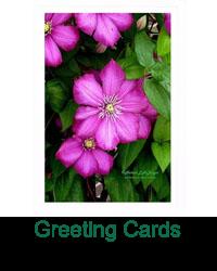 Artist Photo Cards