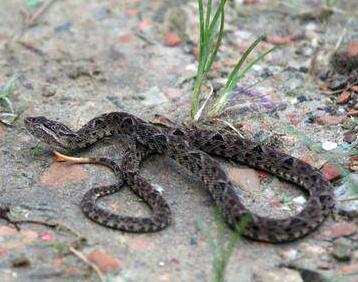 Εντοπίσθηκαν 2 άτομα στο Κιλκίς που απελευθέρωναν φίδια!
