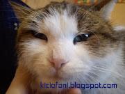 blog śmieszne koty: siedzące koty siedzace koty