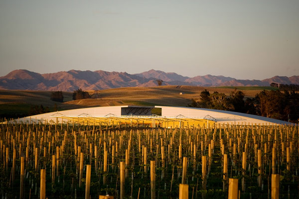 New Zealand wines Yealands