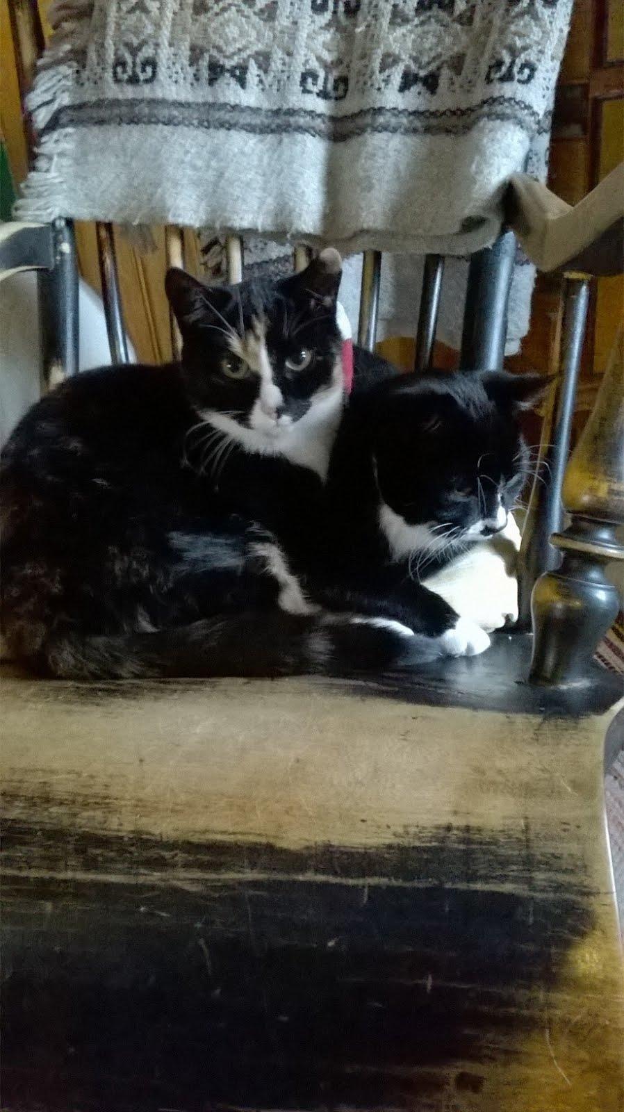 Trissa and Elissi