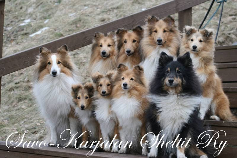 Savo-Karjalan Sheltit ry