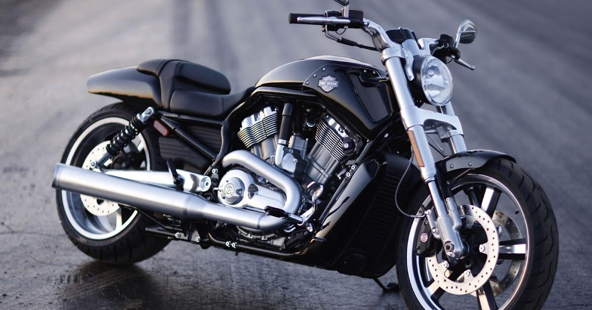 black rider harley v rod muscle vrscf. Black Bedroom Furniture Sets. Home Design Ideas