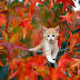 Cute Cat on Colorful Tree hd photos