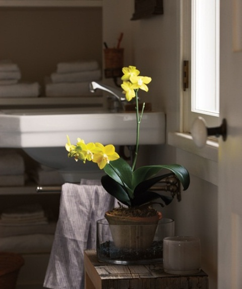 Bathroom design ideas with plants and flowers home design for Spring bathroom ideas