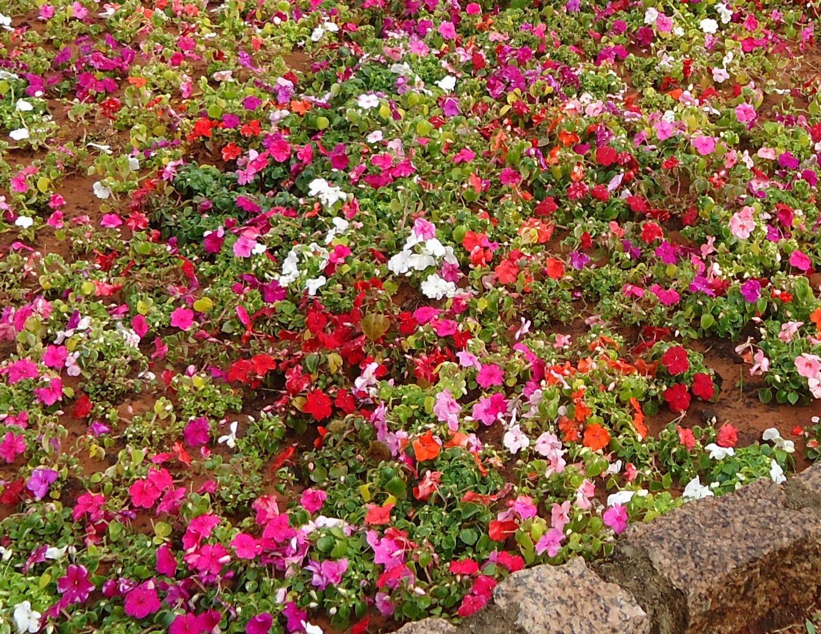 plantas para jardim resistentes ao sol to download plantas para jardim