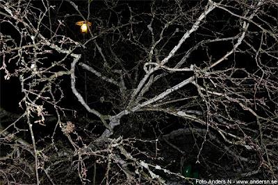 stormen sven, nedblåst träd