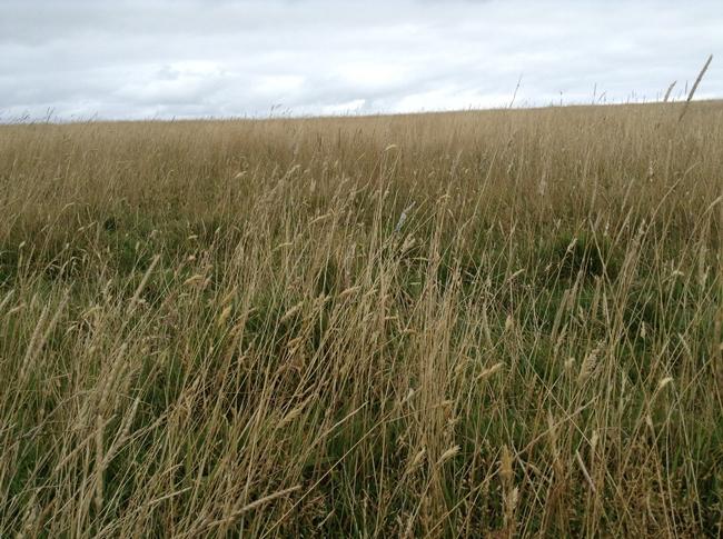 barley pretty summer english country cute ipadography