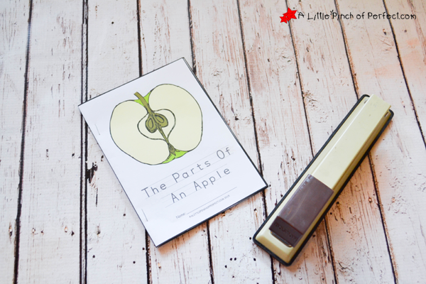 picture about Parts of an Apple Printable named The Components Of An Apple Shade, Browse, and Find out Totally free Printable