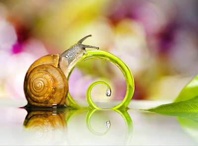 Caracol - Snail (Pequeños bichos del Bosque)