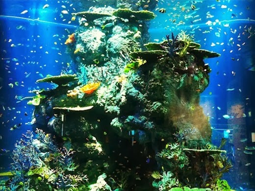 S.E.A. Aquarium Largest in the world, Singapore