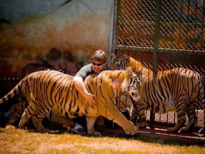 Tigres em Maringá - Um Asno