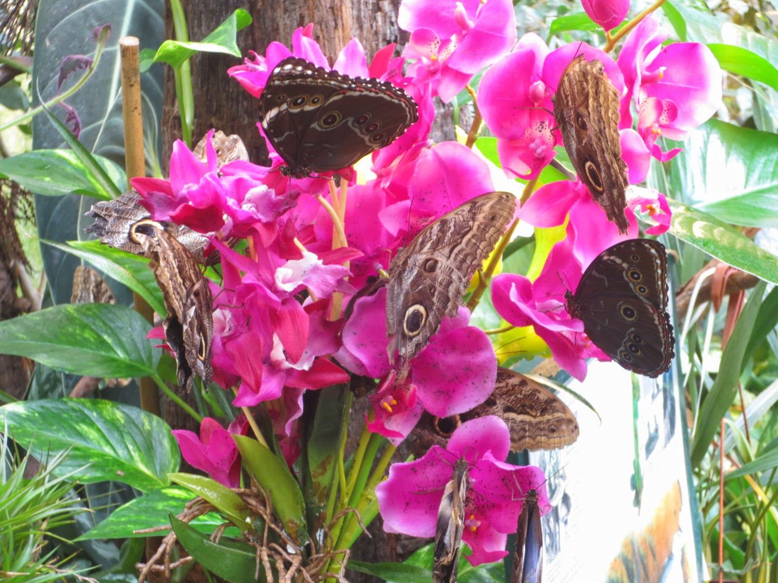 Schmetterling Haus Vienna