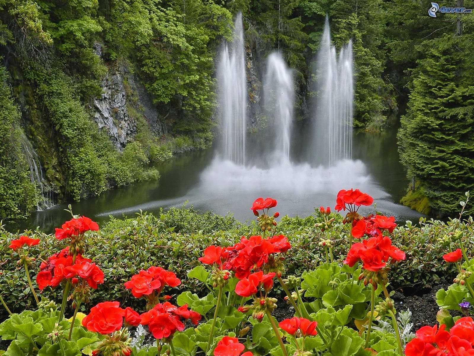 Beautiful nature images waterfall with flowers for Cascada de agua para jardin