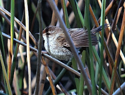 At Heyfield Wetlands -