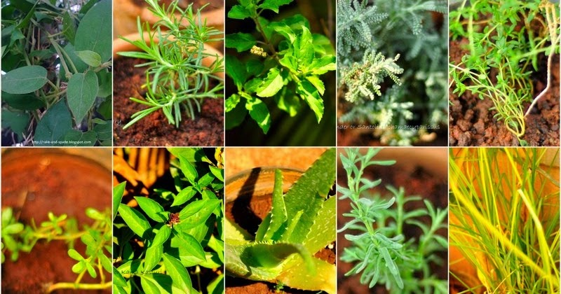 Natural Herbs Used For Medicine