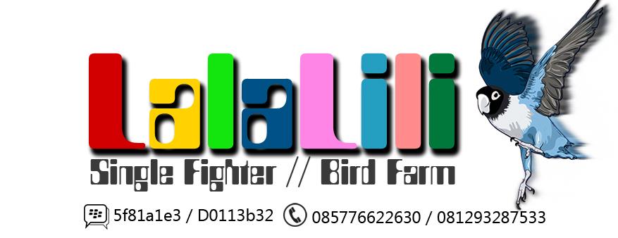 Lala Lili Single Fighter