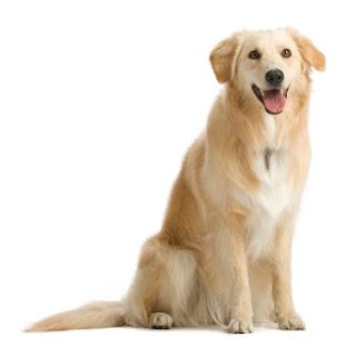 Dog GR Fases da vida de um cão
