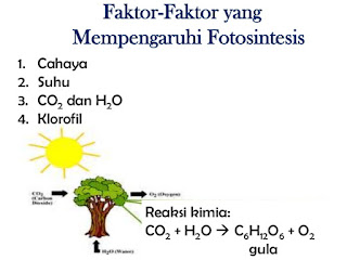 Faktor-faktor yang mempengaruhi proses fotosintesis