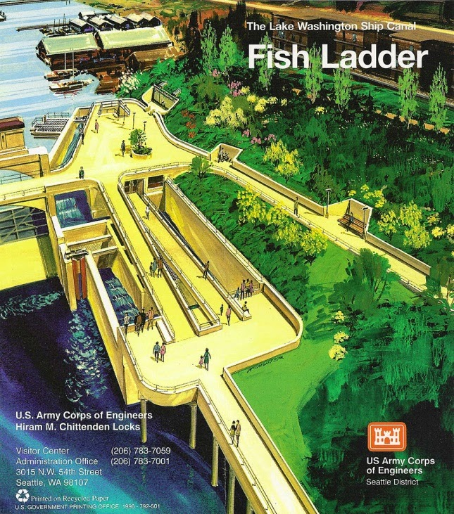 Reisverslag 2013 usa san francisco seattle seattle for Ballard locks fish ladder