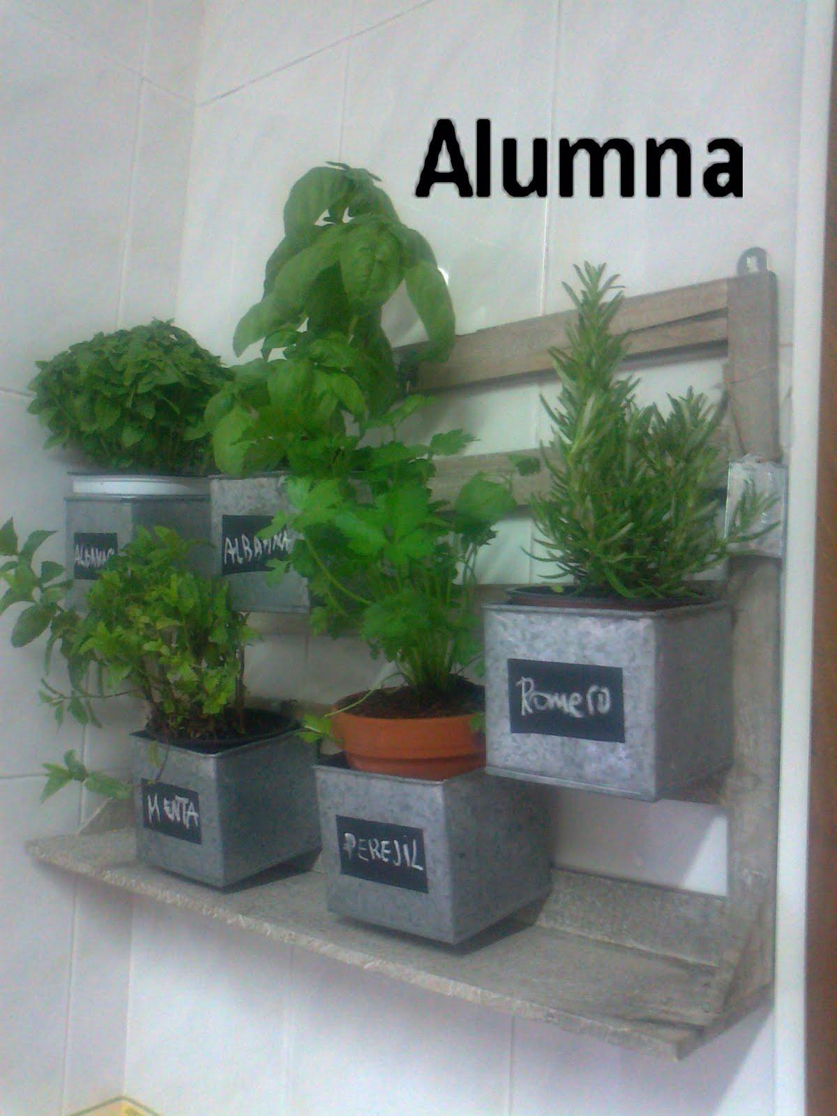 Mis plantas arom ticas en la cocina mi bit cora - Plantas en la cocina ...