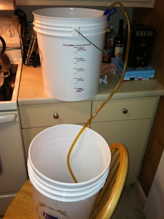Siphoning beer into bottling bucket