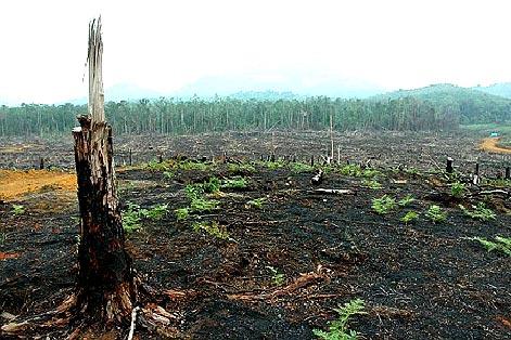 gambar hutan rusak