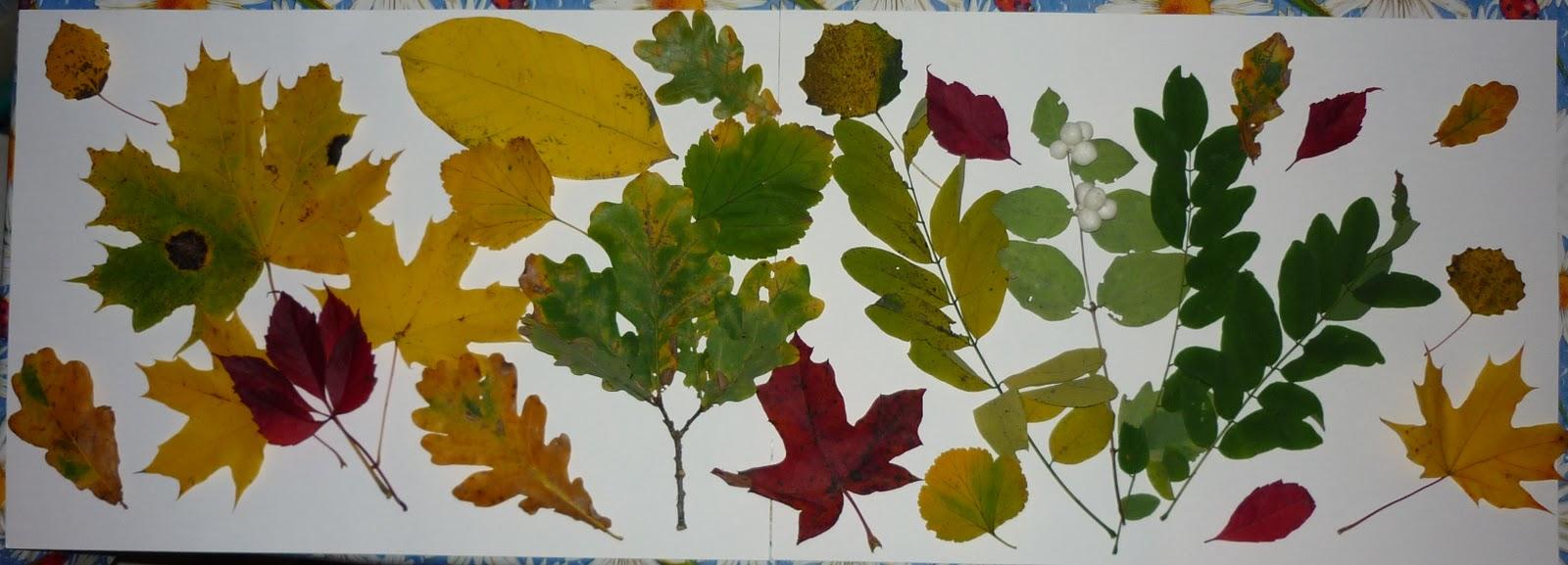 из листьев фото гербарии