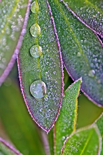 leaves, waterdrops, dewdrops