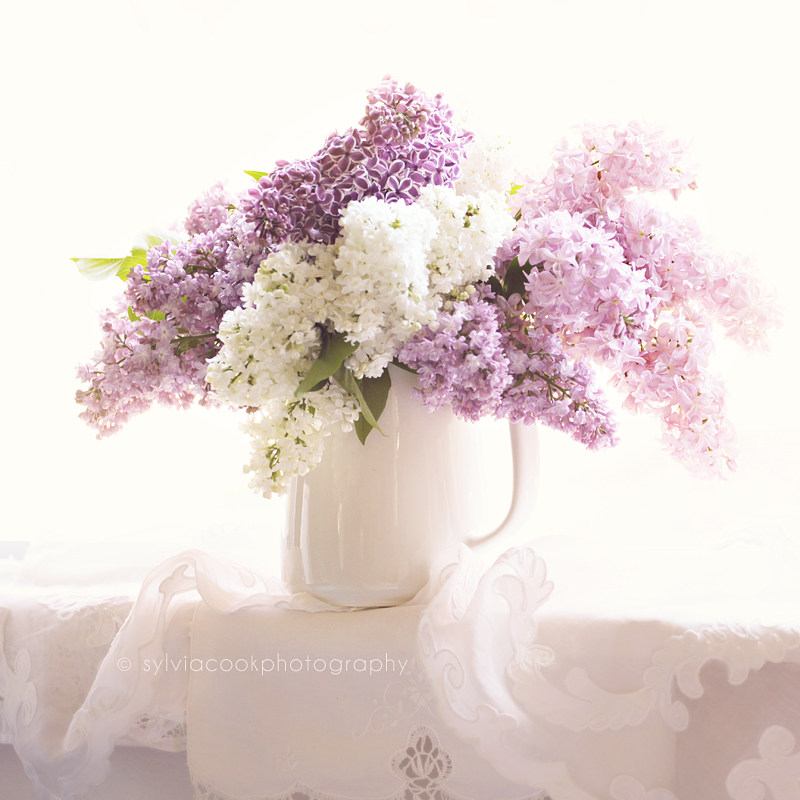 shabby chic photograph, pastel photograph, lilacs