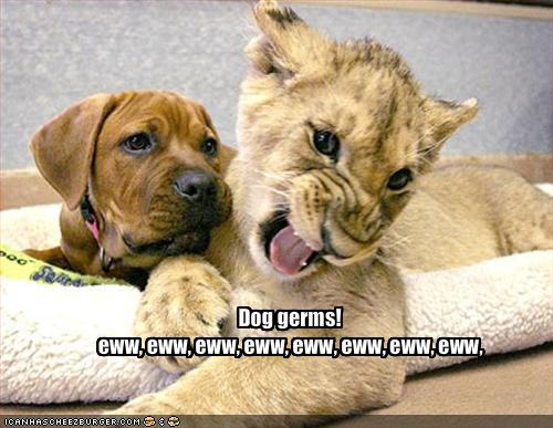Who Got More Germs Cat Or Dog