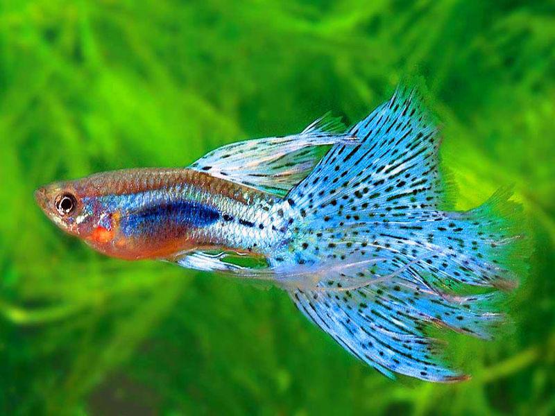 Mooie beelden en gedachten guppies en een schimmel bij for What are the seven fishes
