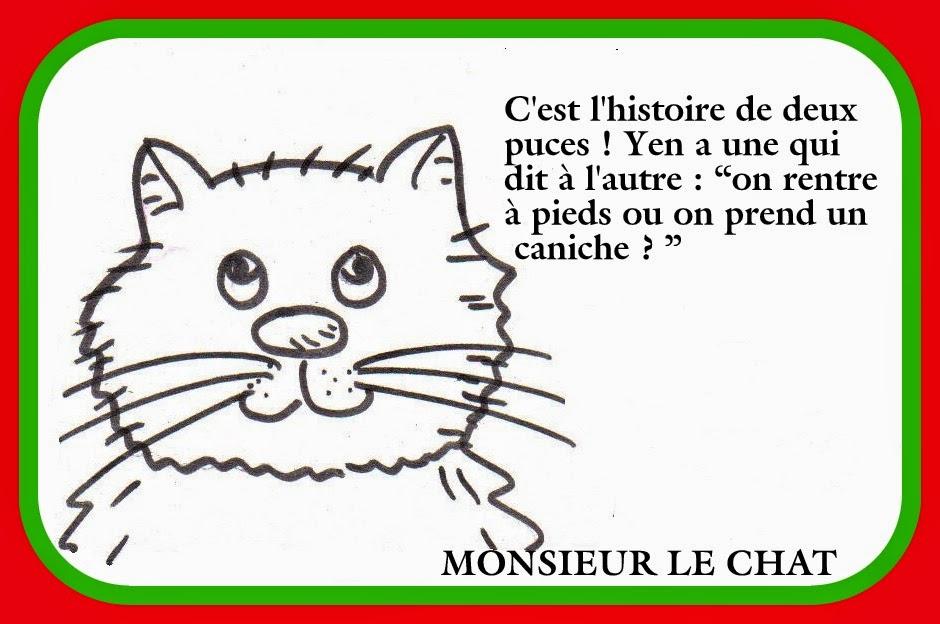 histoire drole de chat