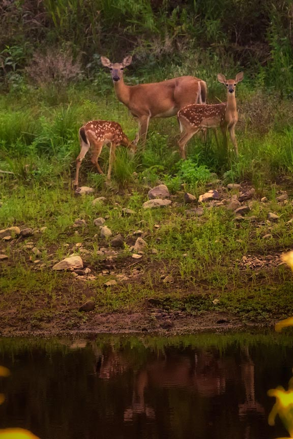 how to take good deer pictures