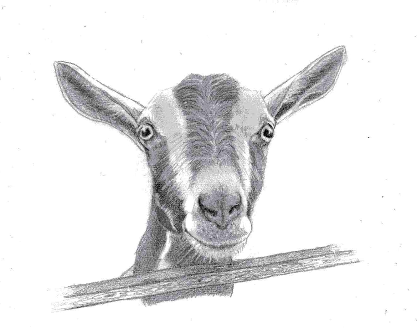 Ellie's Dairy - The Finest Goat Milk, from Kent: It's so ...