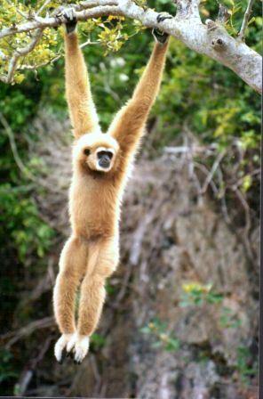 Ktkpk S Debak Fauna Oriental Dan Fauna Australia