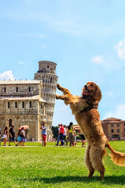 10 Most Amazing Dog Photographs Around From World